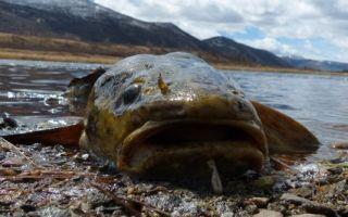 Рыбалка на амуре: весной, летом, осенью и зимой, какую рыбу можно поймать