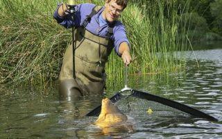 Ловля карпа на картошку: подготовка картошки для ловли, снасти, техника ловли