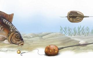 Ловля карпа на фидер, метод ловли и оснастка