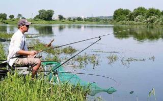 Ловля рыбы фидером — тактика для начинающих
