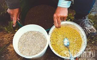 Салапинская каша для рыбалки — рецепт приготовления для фидера