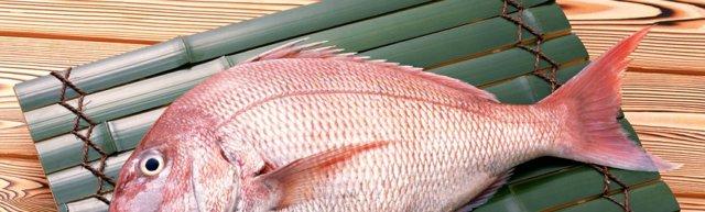 Польза и вред морского окуня для организма: калорийность, витамины, рецепты