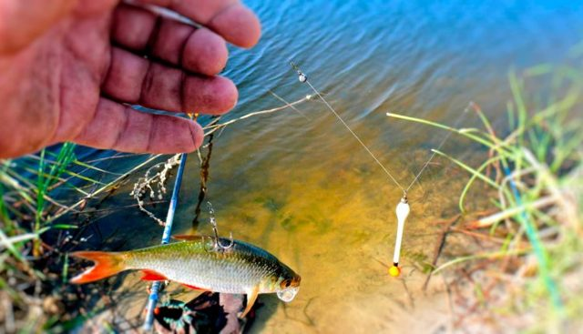 Ловля щуки по открытой воде осенью и летом