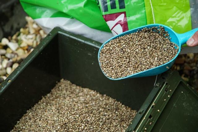 Как сварить семена конопли конопля наше радио