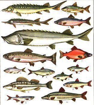 Рыбалка на реках Кировской области и в Кирове, обзор водоемов