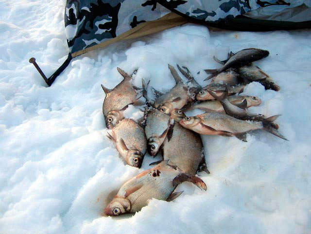 Ловля подлещика зимой: снасти, приманка и прикормка, техника ловли