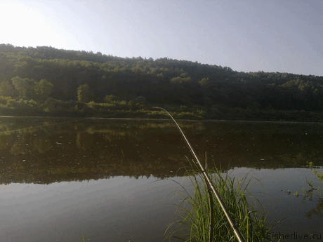 Ловля рыбы фидером - тактика для начинающих