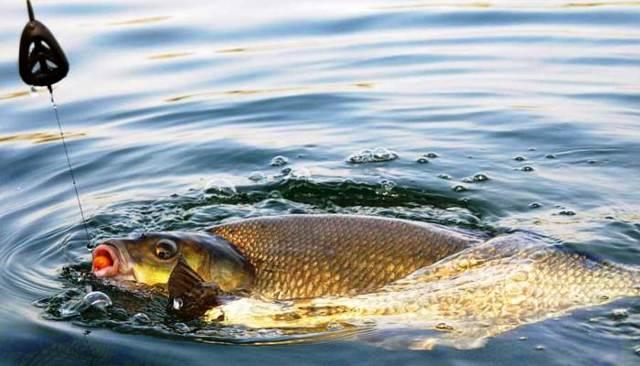 График клева рыбы: на что ловить рыбу и какую, как клюет рыба и где