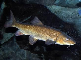 Слух у рыб, что является органом слуха у рыбы