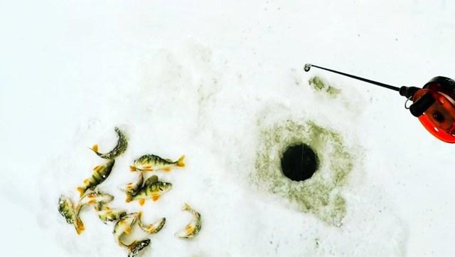 Ловля крупного окуня зимой на балансир, блесну и мормышку