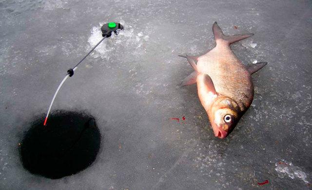 Ловля леща зимой на коромысло: техника ловли, наживки и советы