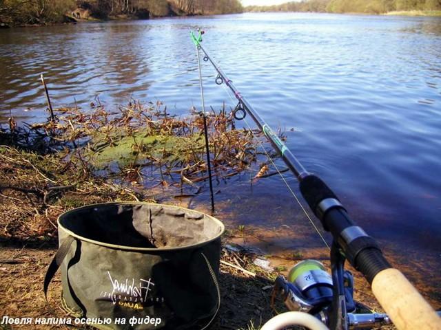 Ловля налима на Оке осенью: ловля на донку, фидер, наживки и прикормки