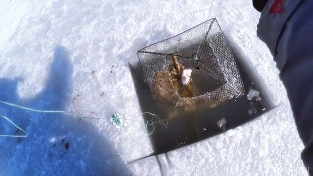 Ловля раков зимой на раколовку: техника ловли, приманка