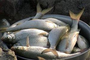Ловля воблы: техника ловли, обзор снастей, наживки и прикормки