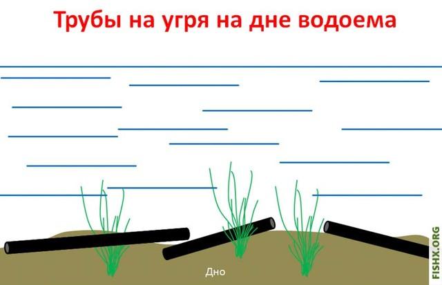 Ловля угря на трубу, где ловить угря