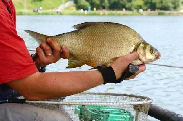 Меласса для рыбалки своими руками, делаем в домашних условиях