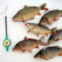 Рыбалка на карпа зимой: техника ловли, снасти, прикормки и приманки