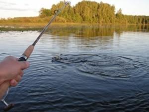 Рыбалка на хариуса в Красноярске: ловля в разное время года, места