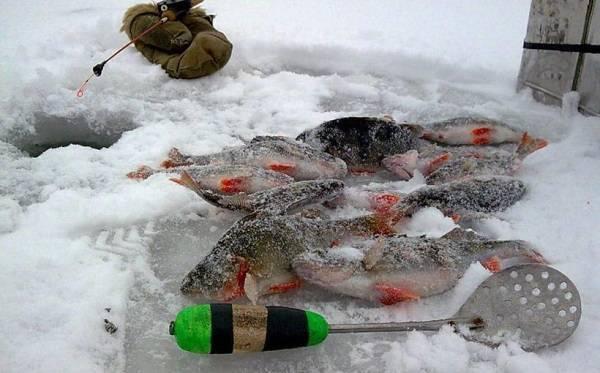 Снасть для зимней рыбалки на окуня: виды снастей, приманки и места для ловли