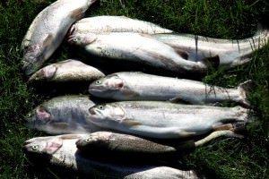 Бисерово рыбхоз: платная рыбалка, цены на услуги и контакты
