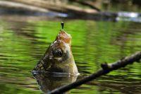 При каком атмосферном давлении лучше клюет рыба, повышенное и пониженное давление