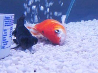 Спят ли рыбы по ночам, в аквариуме и на речке