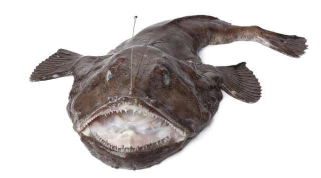 Виды белой рыбы, названия с фото, полный список, полезные свойства