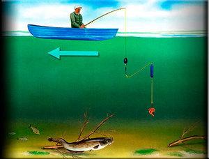 Ловля канального сомика, снасти и наживки, где и когда ловить