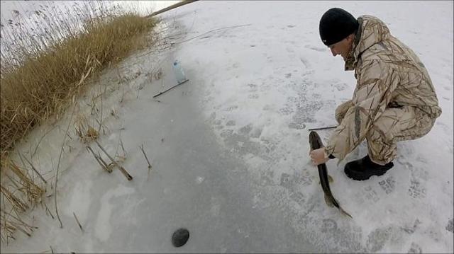 Ловля щуки зимой на балансир: техника ловли, лучшие балансиры