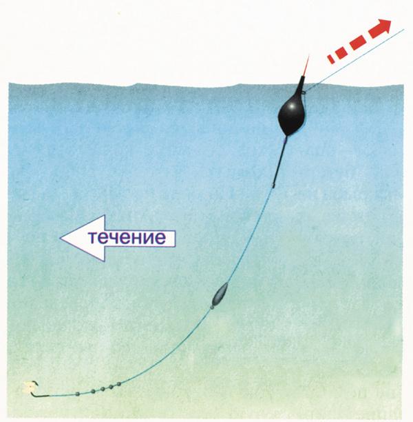 Ловля чехони: на что ловить, где и когда, ловля на спиннинг и поплавок
