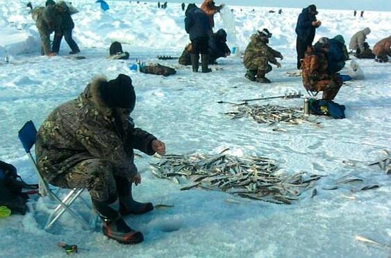 Ловля омуля: летом и зимой на Байкале, обзор снастей и приманок