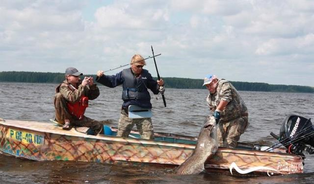 Ловля сома на донку с берега и с лодки, техника ловли, донка своими руками