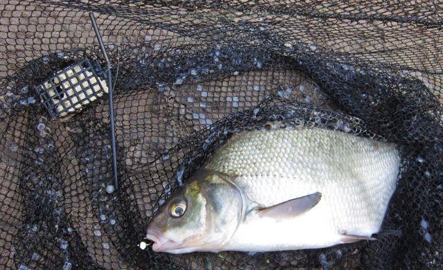 Почему рыба клюет на пенопласт, ловля рыбы на пенопласт
