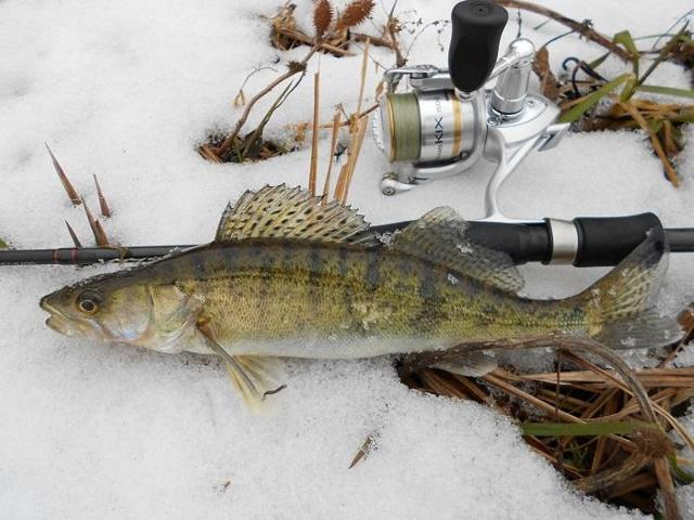 Зимние блесны на судака, ТОП-6 самых уловистых