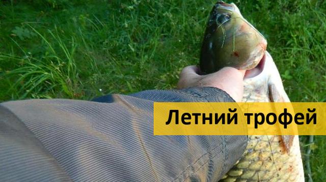 Ловля белого амура на фидер (весной, летом, осенью): снасти, наживки