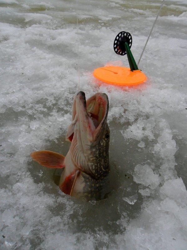 Ловля чебака зимой на мормышку, где ловить и в какое время
