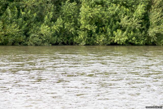 Ловля голавля на поплавочную удочку: на что ловить, снасти, наживки
