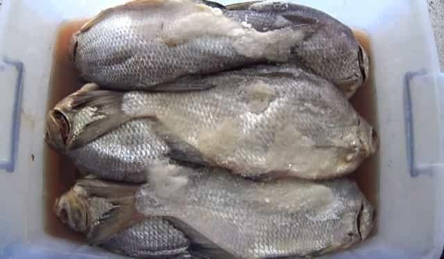 Как солить рыбу для сушки в домашних условиях: вкусные рецепты