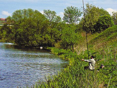 Ловля густеры весной, летом и осенью, как ловить на поплавочную удочку