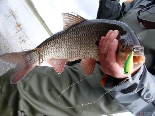 Рыбалка в Карагандинской области: озера и реки, летняя и зимняя рыбалка