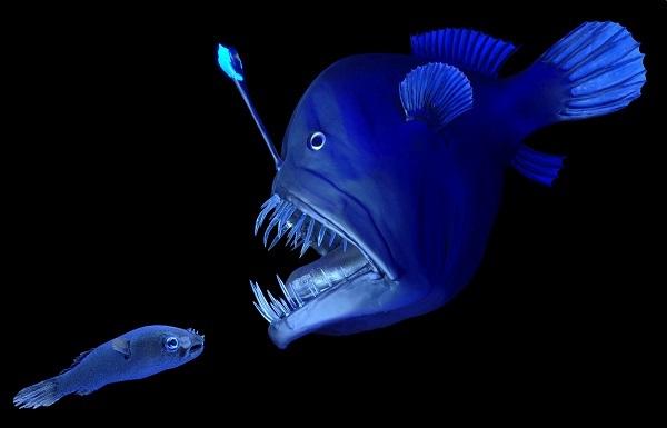 Морские черти (удильщики): описание рыбы, где водится, чем питается