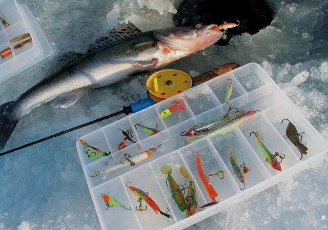Ловля судака зимой на балансир: оснастка и техника ловли