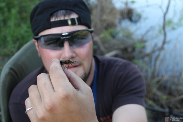 Ловля голавля на донку (фидер): снасти, техника ловли и наживки