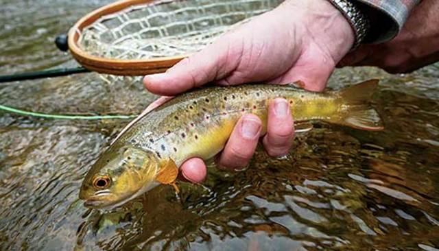 Где водится форель ручьевая, озерная, радужная, ловля разных видов