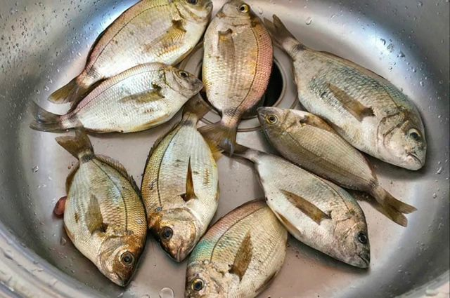 Паразиты в рыбе: опасные для человека, как они выглядят, описание
