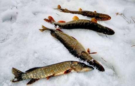 Стельки с подогревом для рыбалки: как выбрать, как сделать своими куками