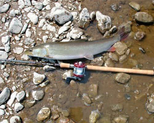 Ловля тайменя на спиннинг: снасти, где ловить, приманки