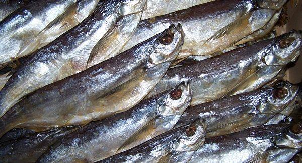 Рыба Шамайка (царская рыба): описание, как выглядит, ловля, штрафы