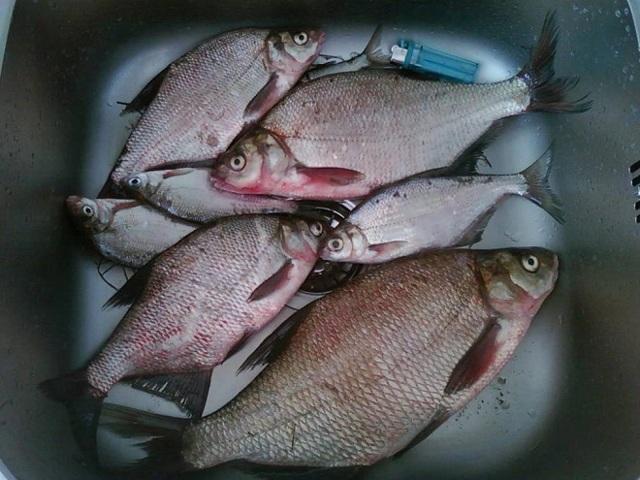 Пшено для рыбалки, как правильно сварить пшено