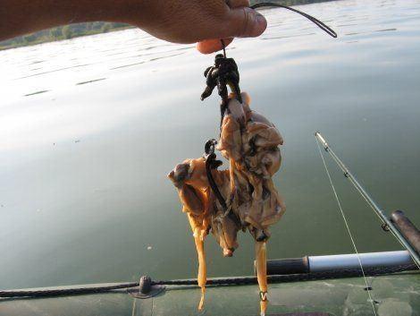 Наживка на сома: лучшая наживка для ловли сома весной, летом и осенью